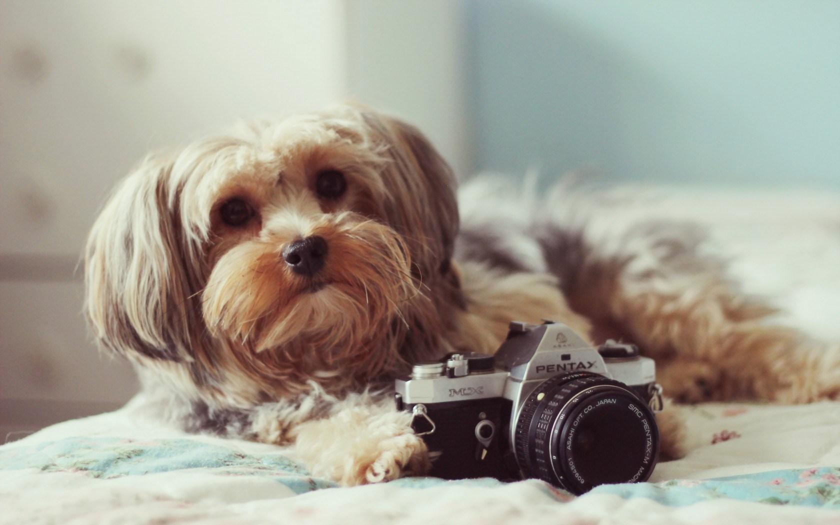 dog backgrounds for websites