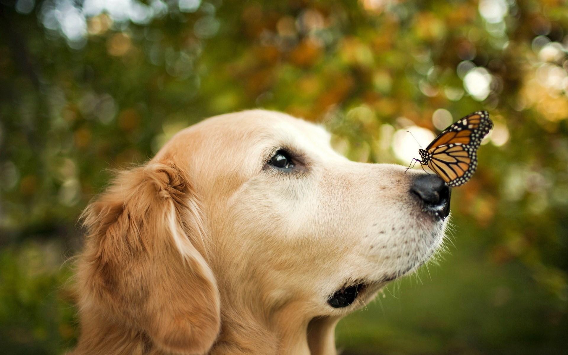 dog cute hd images