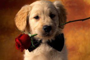 dog cute love