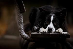 dog hd dark background
