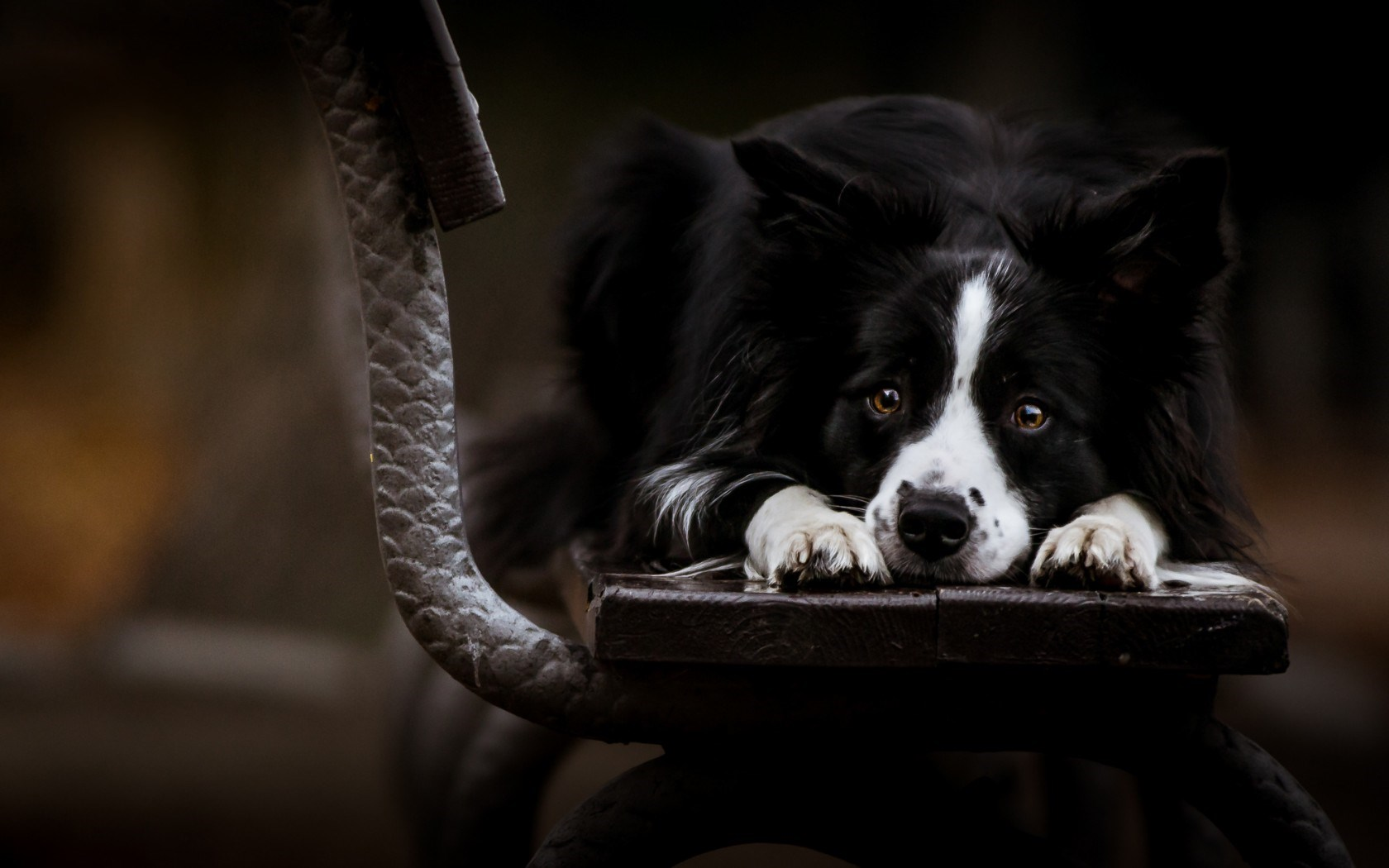 dog hd dark background