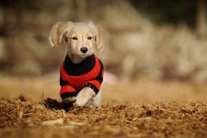 dog hd photos