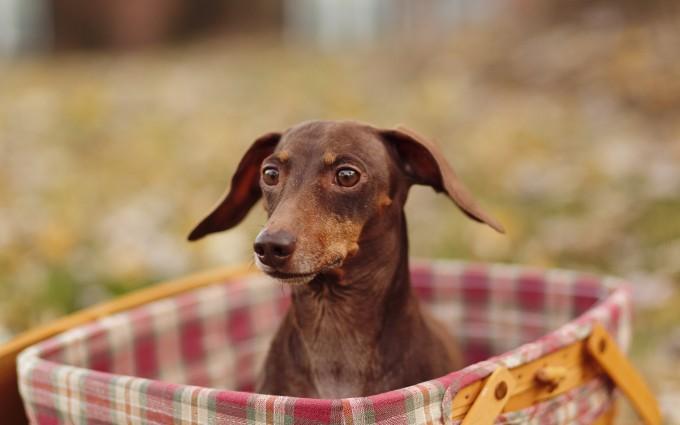 dog image download