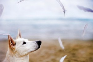 dog image free download