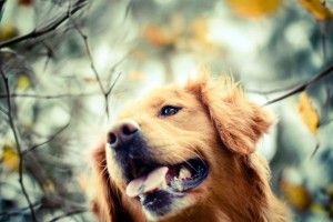 dog images download free