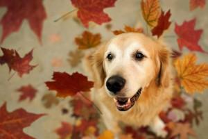 dog leaves autumn