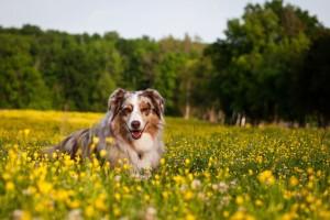 dog nature wallpaper