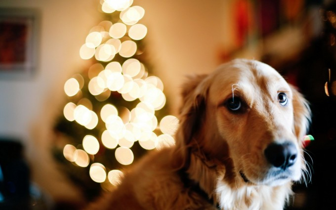 dog photo download