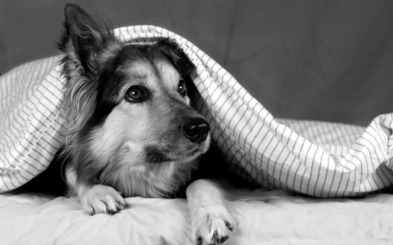 dog photo hd