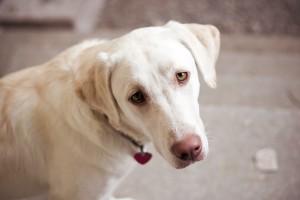 dog photos download free