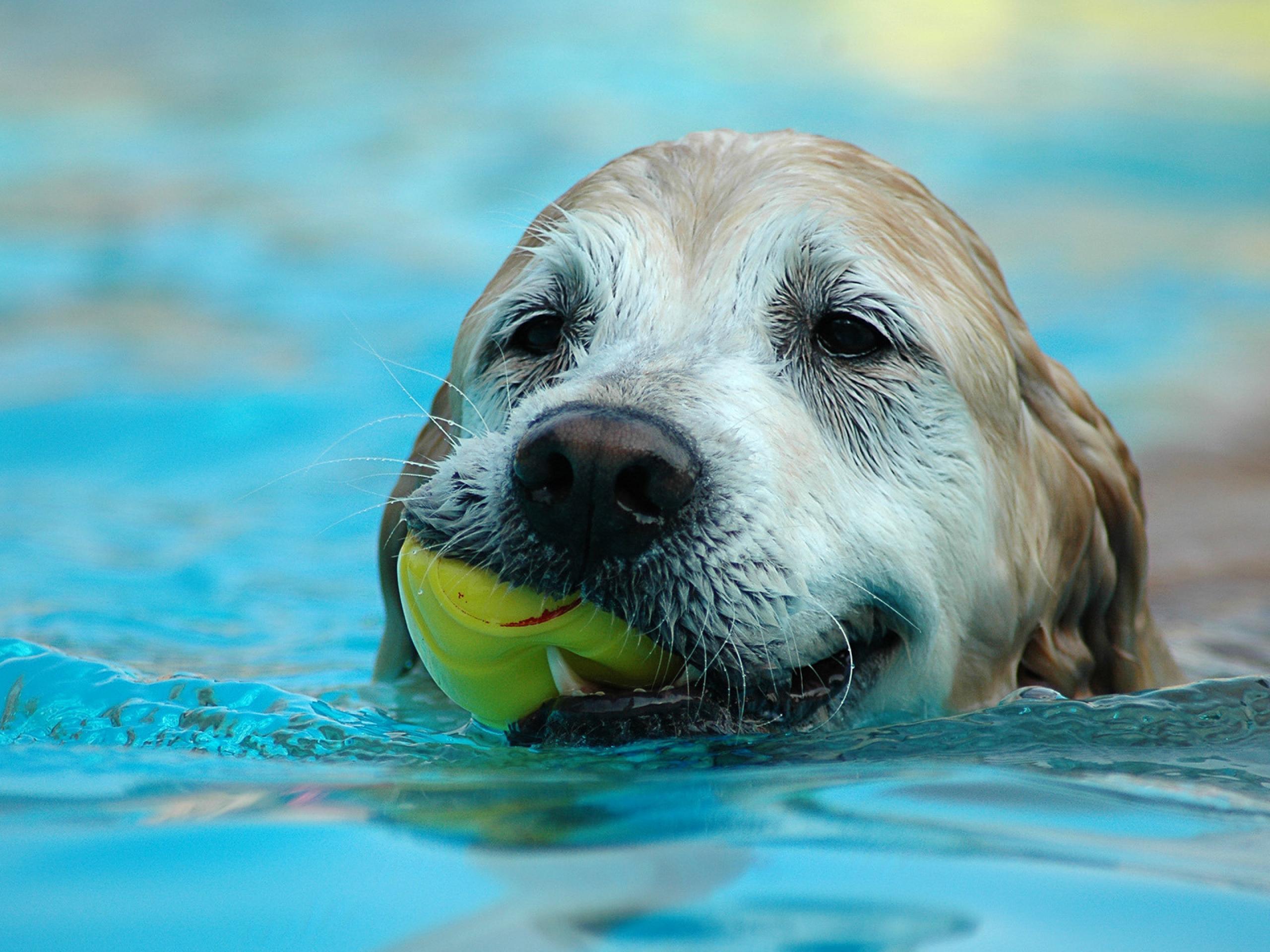 dog photos download