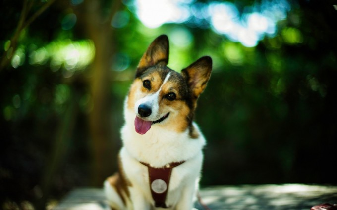 dog picture download