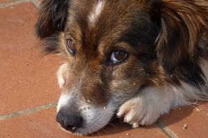 dog sweet
