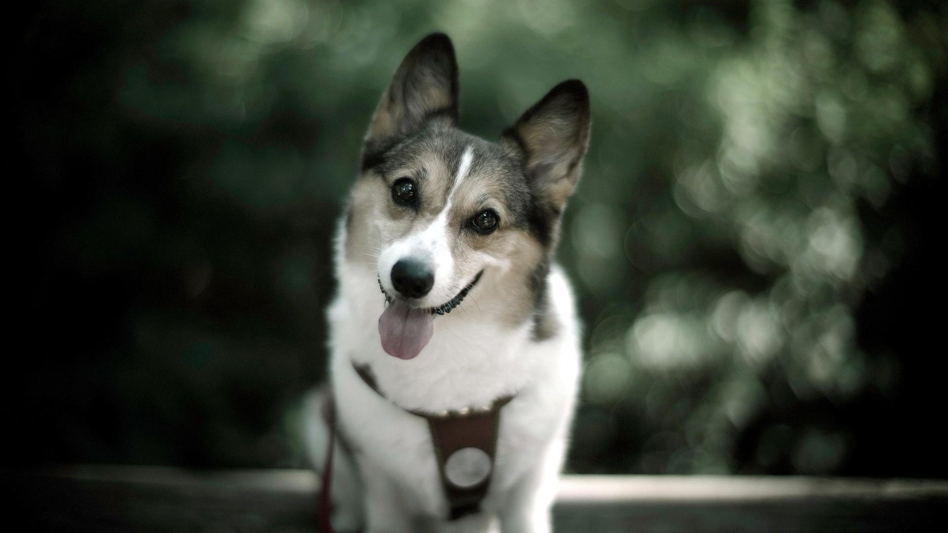 dog wallpaper hd