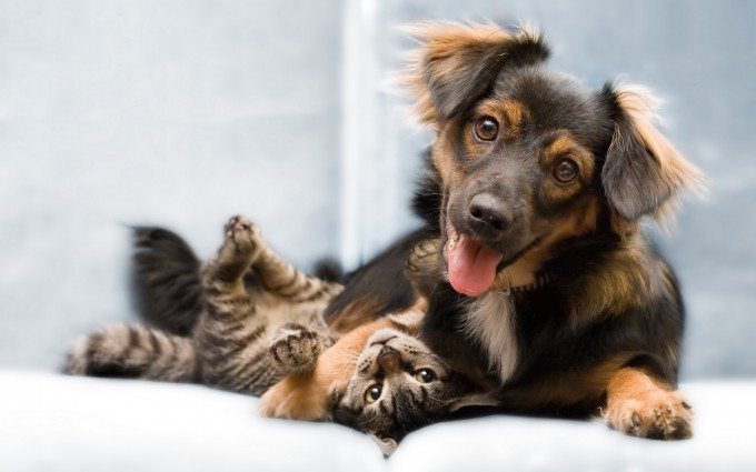 dogs and cats wallpapers