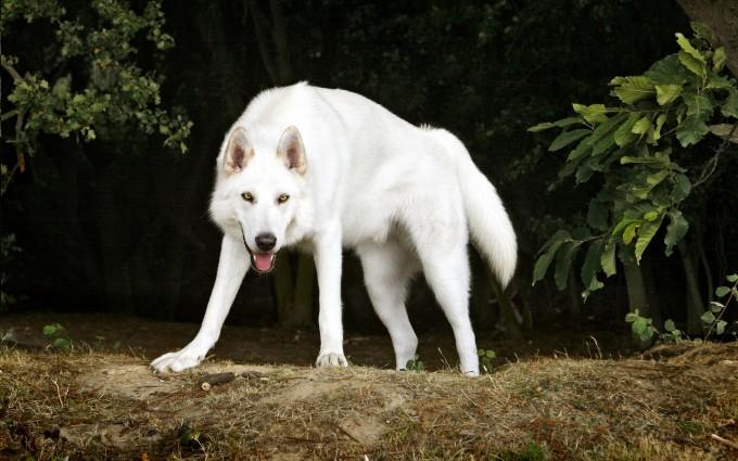 dogs hd image