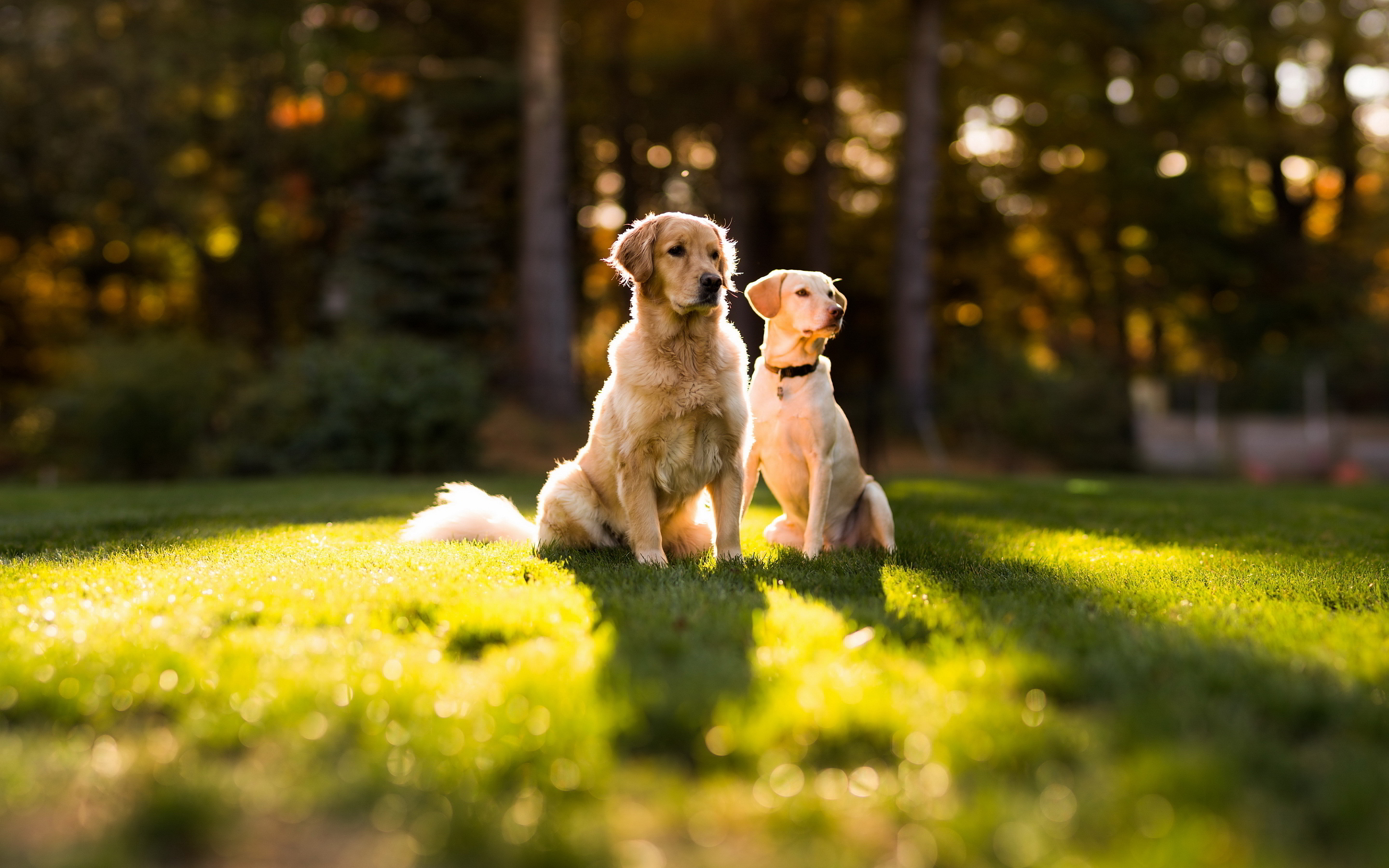 dogs hd wallpapers download - HD Desktop Wallpapers | 4k HD