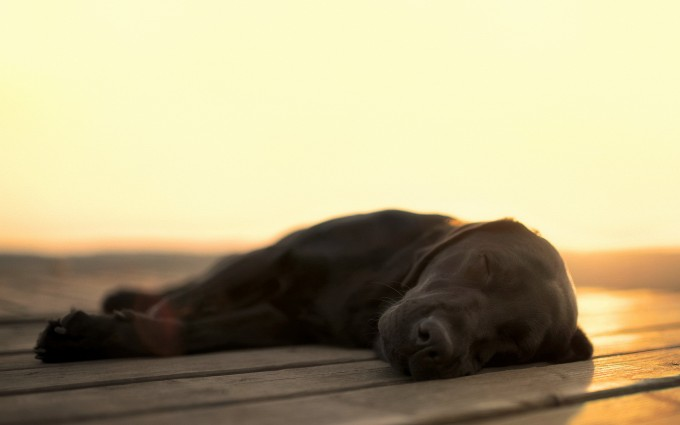 dogs image free download