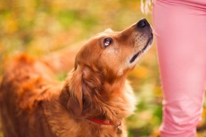 dogs images hd