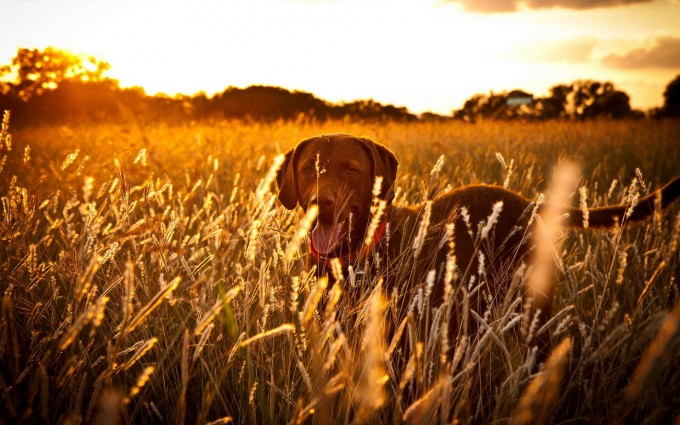 dogs photo download