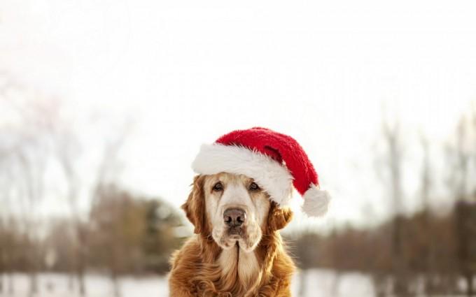dogs winter