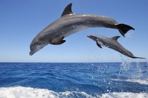 dolphin wallpapers free download