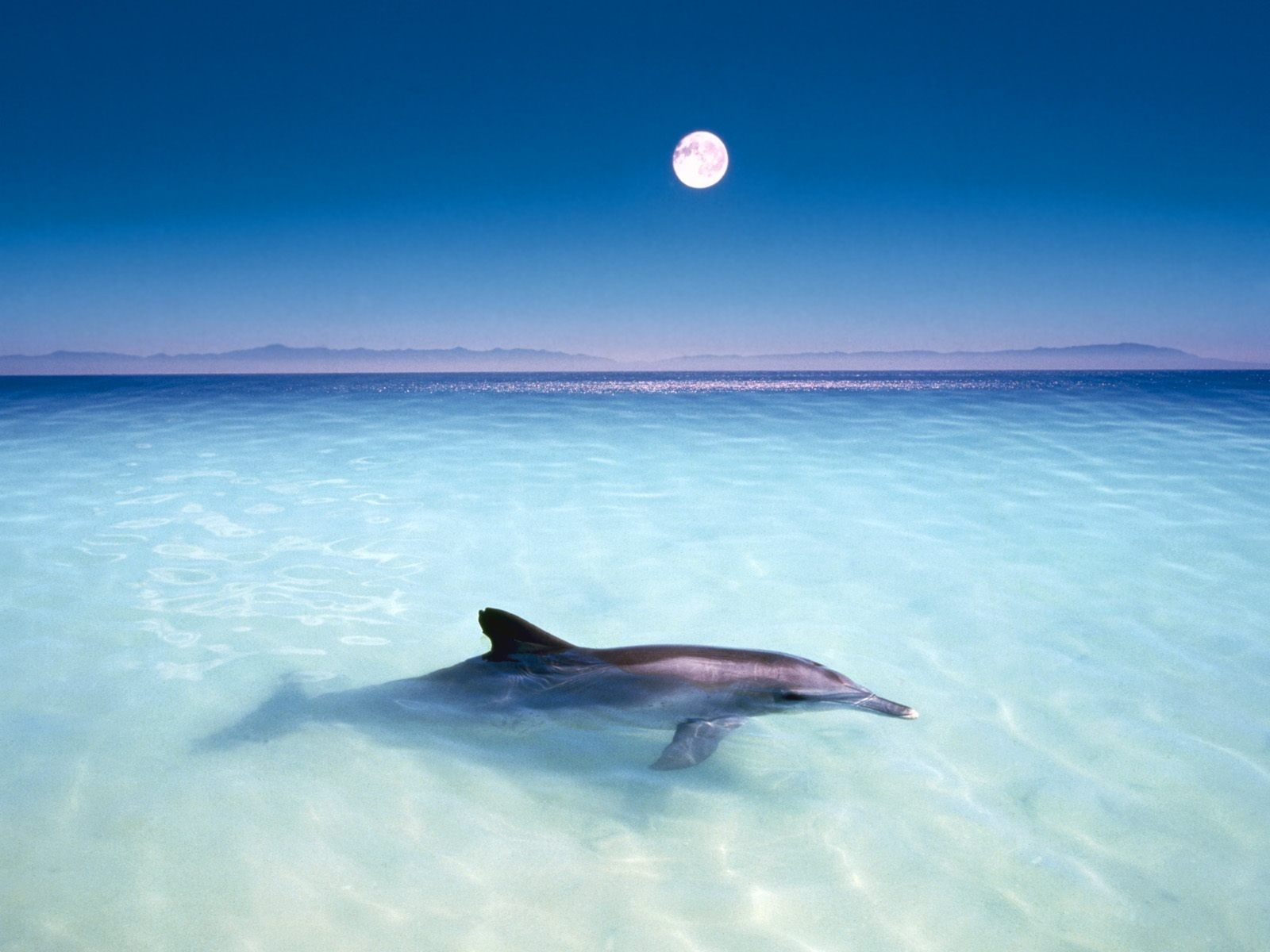 dolphine wallpaper