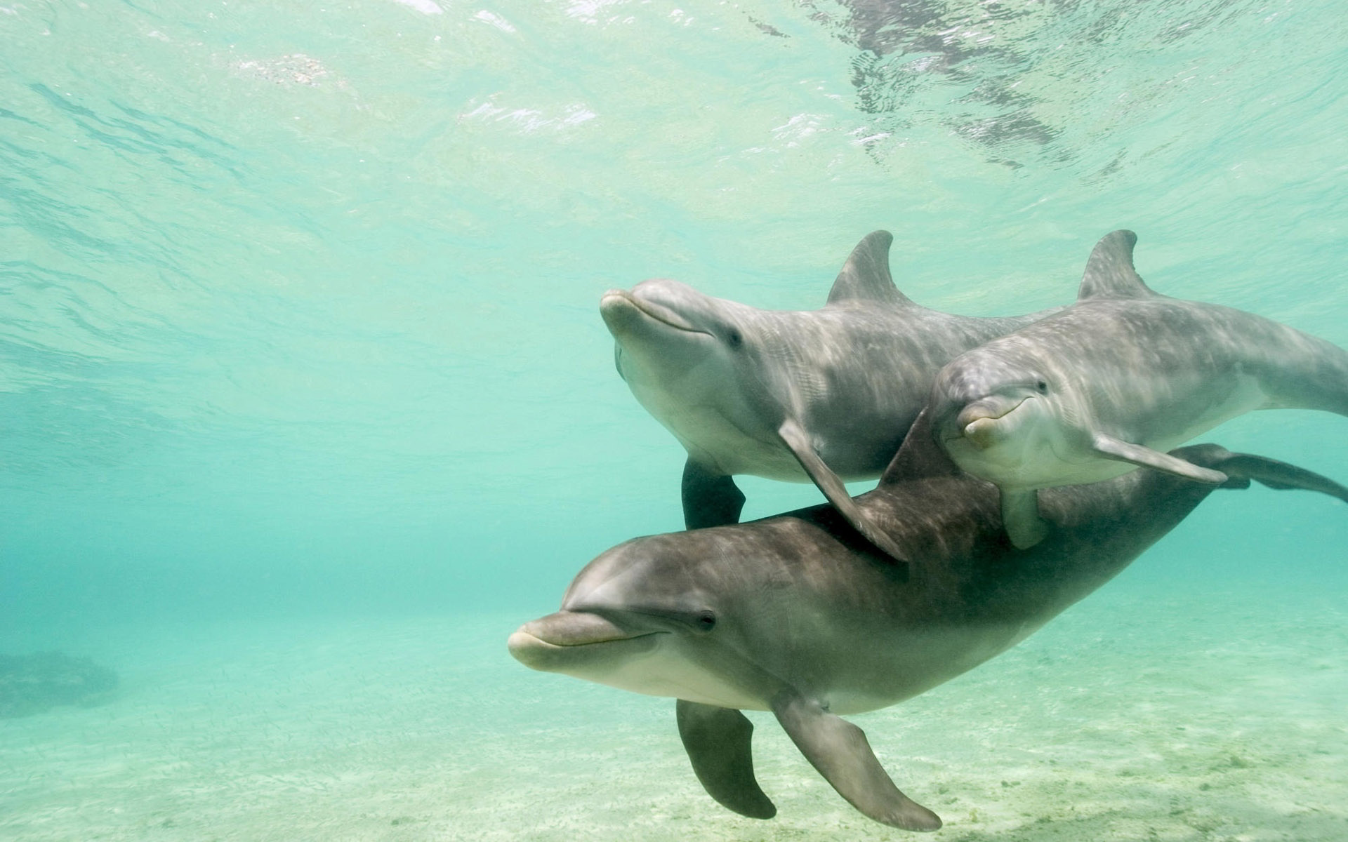 dolphins pictures download