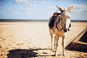 donkey saddle photo
