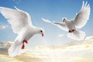 dove images