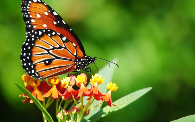 download butterfly images