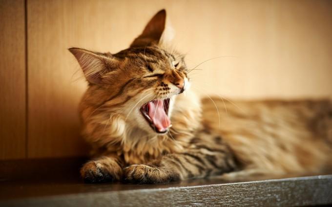 download cat wallpaper
