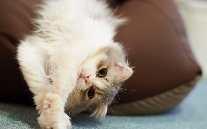 download cat wallpapers