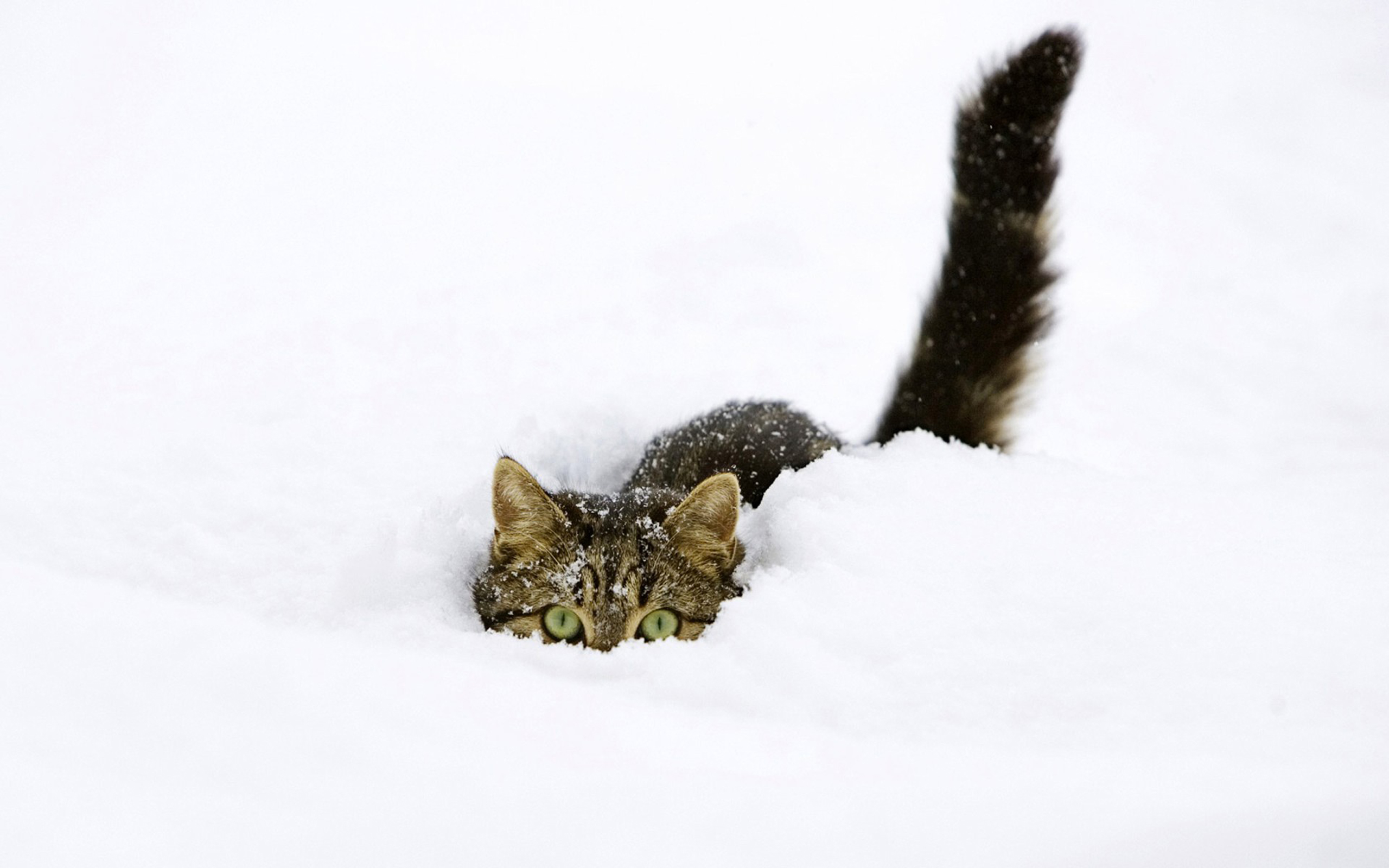 download cute cat images