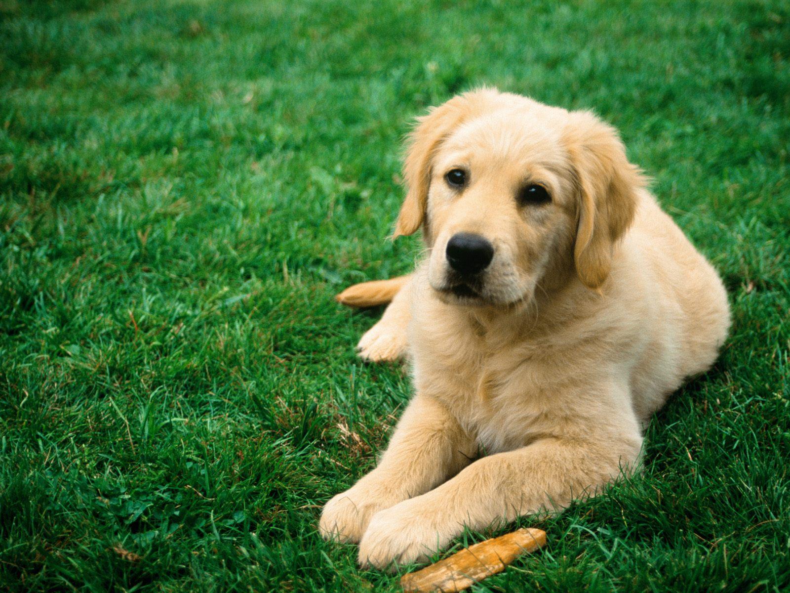 download dog image