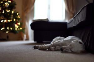 download dog wallpaper