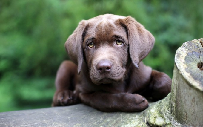 download dogs wallpapers