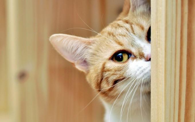 Download cute cats wallpaper wallpaper - Cute kitten wallpaper free download ...