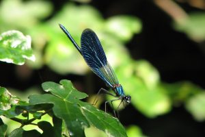 dragonfly photos free