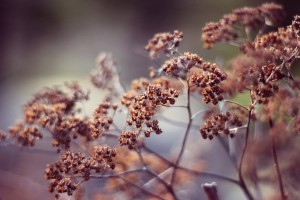 dried plants macro wallpaper
