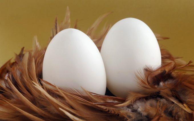 egg wallpaper