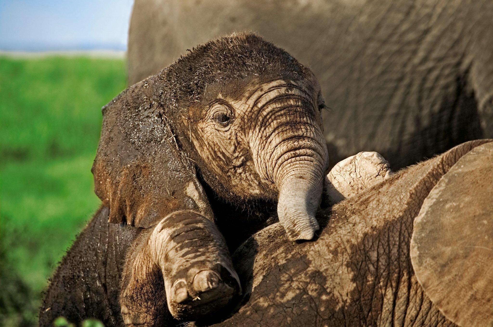 elephant hd images