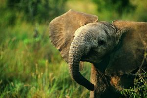 elephant photos free