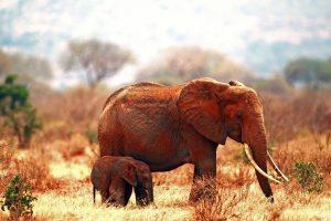 elephant photos hd