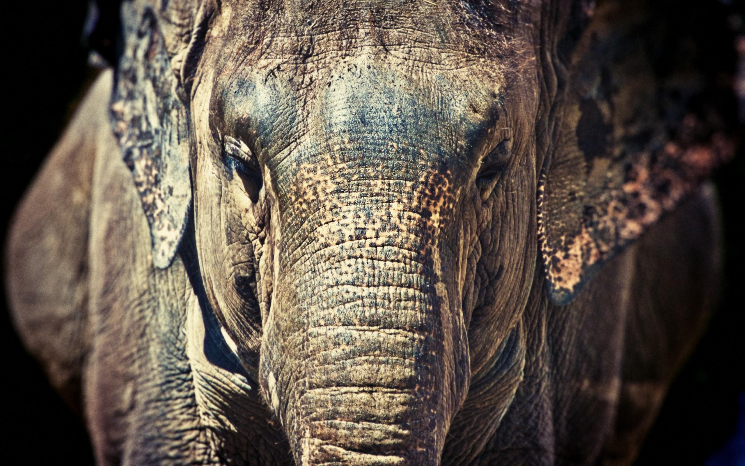 elephant pics hd