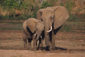 elephant pictures hd