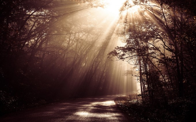 enchanted forest road A4