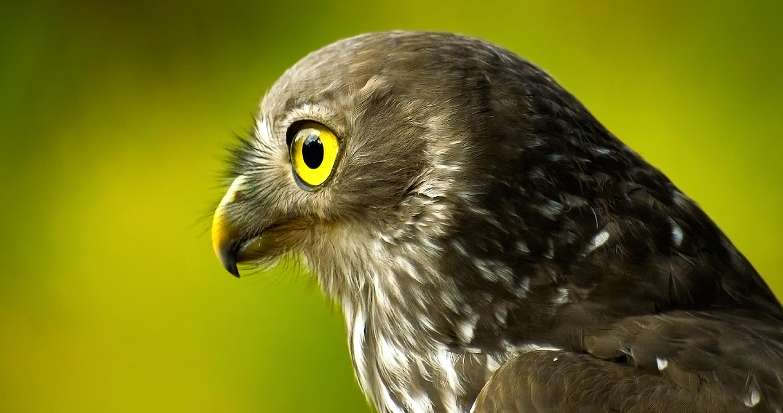 falcon wallpaper hd