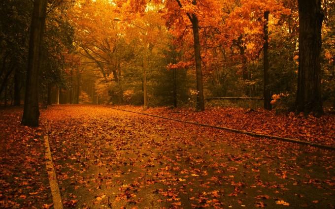 fall background wallpaper