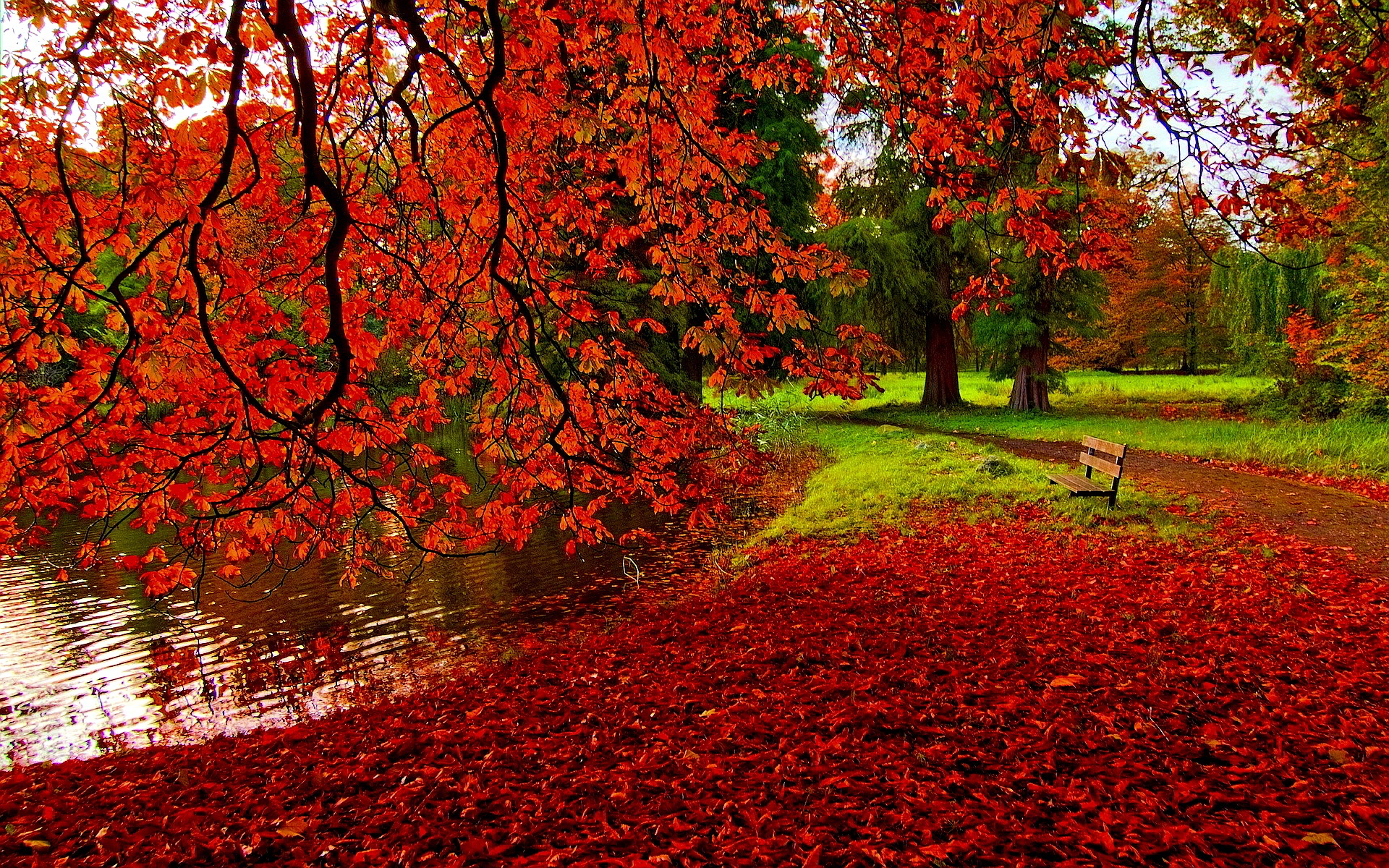 fall backgrounds beautiful